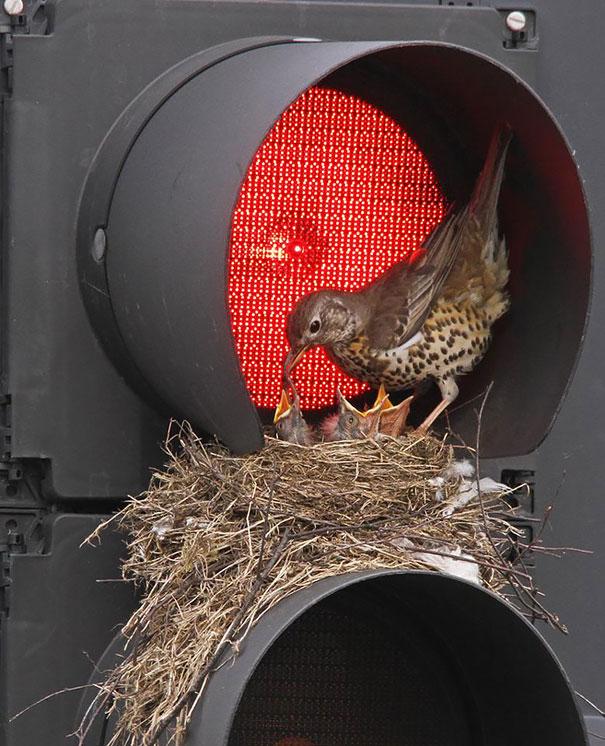 ninhos incríveis, vários exemplos que são a prova de como as aves se adaptam ao ambiente onde vivem.
