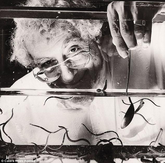 profissões mais estranhas criador sanguessugas