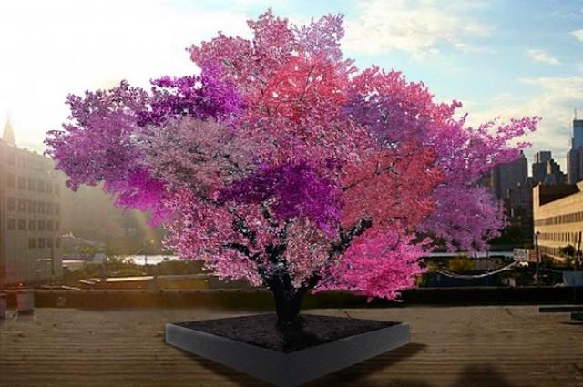 Árvore da vida 40 fruit tree
