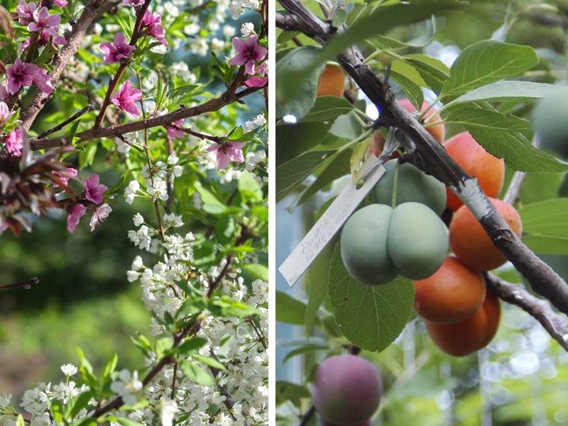 árvore de fruto arte