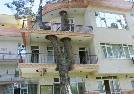 Os arquitetos que desenharam estas casas, em vez de cortarem árvores para as construir, decidiram incorporá-las na estrutura dos edifícios.