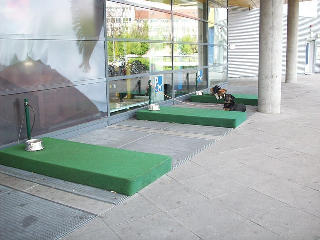 estacionamento para cães calor