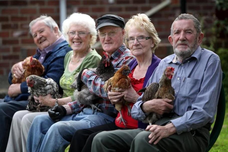 henpower terapia com animais