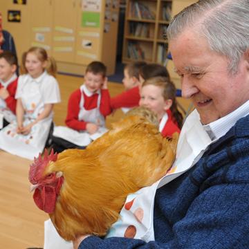 terapia com animais galinhas
