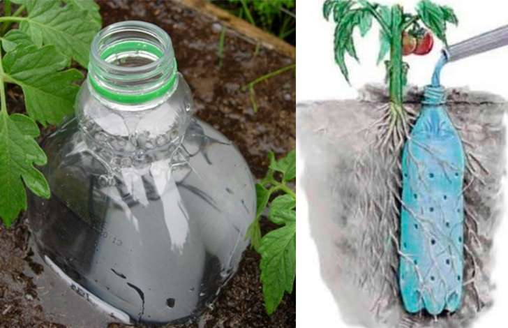 Como regar as plantas garrafa