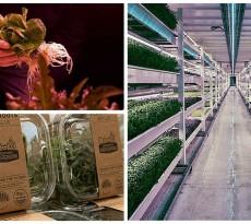 agricultura interior londres