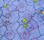 alamy flores deserto do atacama