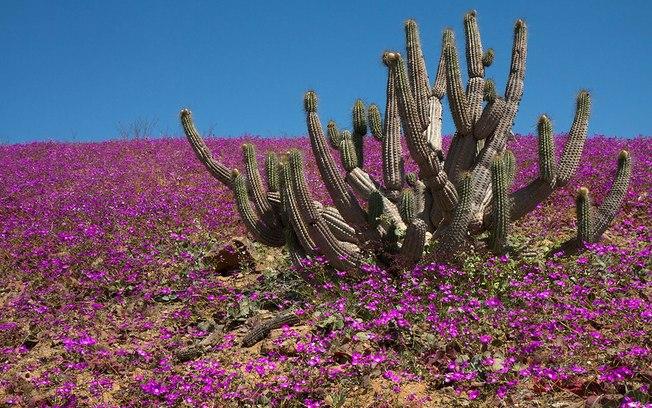 chuva deserto do Atacama