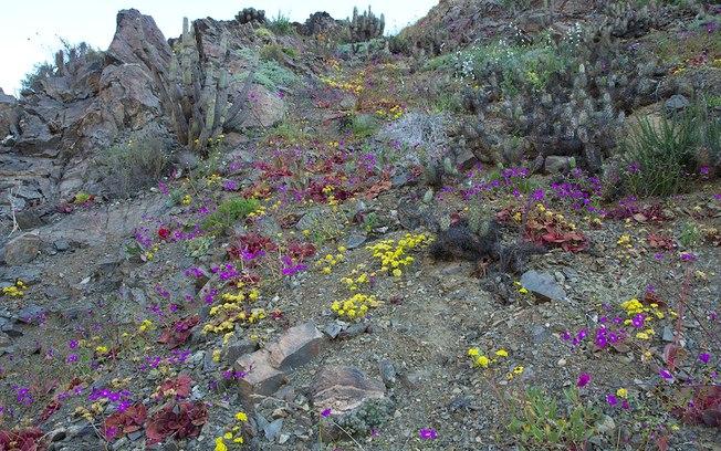 deserto do Atacama flores