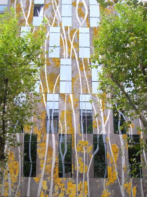paredes vivas - Cimento biológico