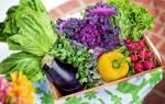 vegetais alimentos orgânicos