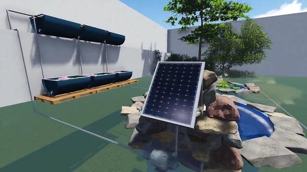 piscina ecológica plantas