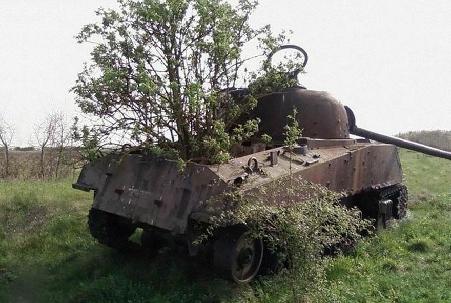 Tanques natureza árvore