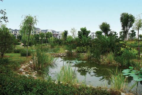 jardim filtrante Phytorestore