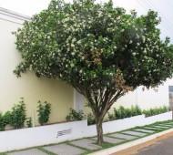 árvores cidades calçada