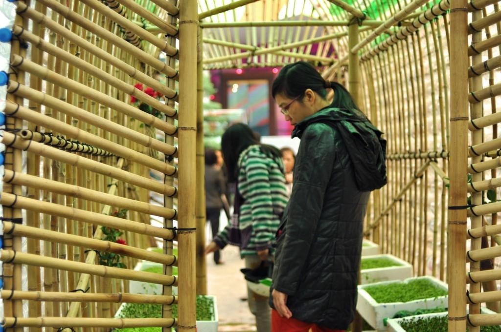 estufa bambu horta urbana